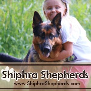 German Shepherd Dog CanaDogs